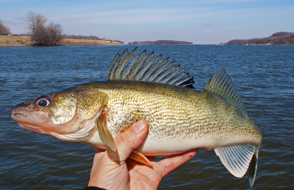 IMAGE: http://www.fisheadtackle.com/blog/wp-content/uploads/2012/03/IMG_0993xe1.jpg