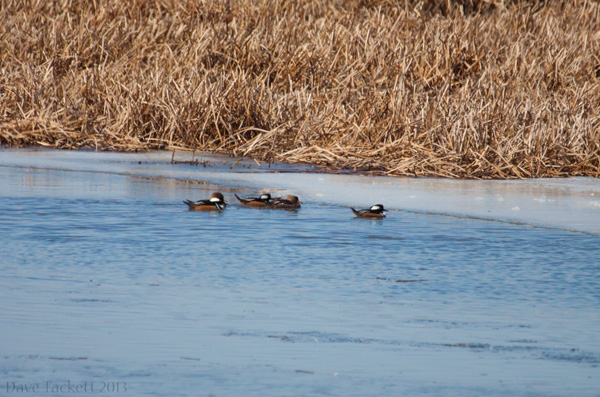 IMG_6153t6
