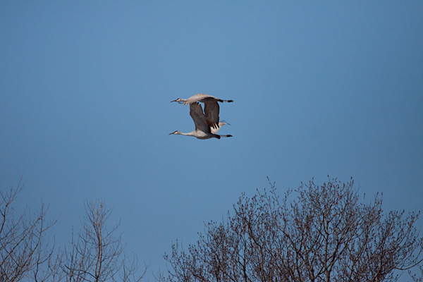 IMG_6198t6