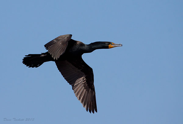 IMG_6957t6