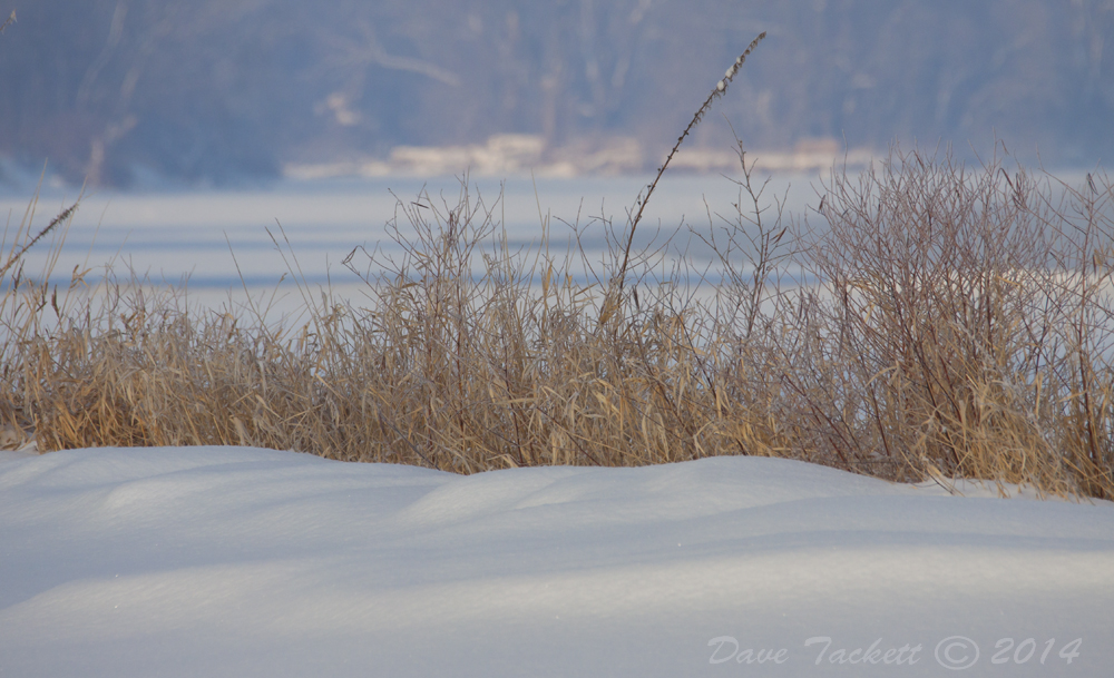 IMG_0136t1