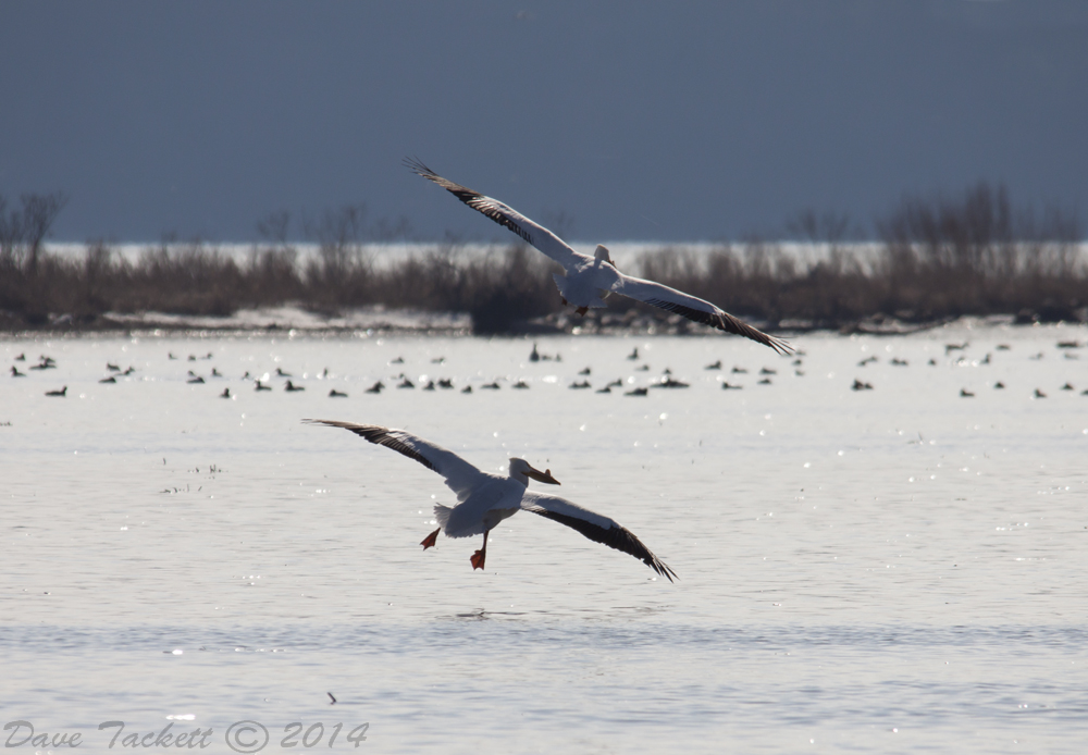 IMG_5165t1