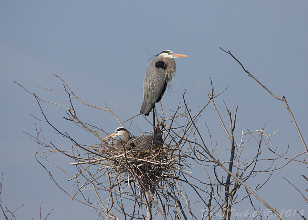 IMG_5932t1