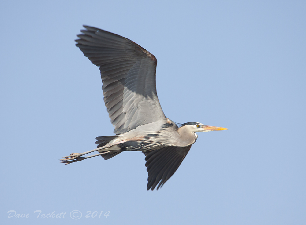 IMG_5941t1