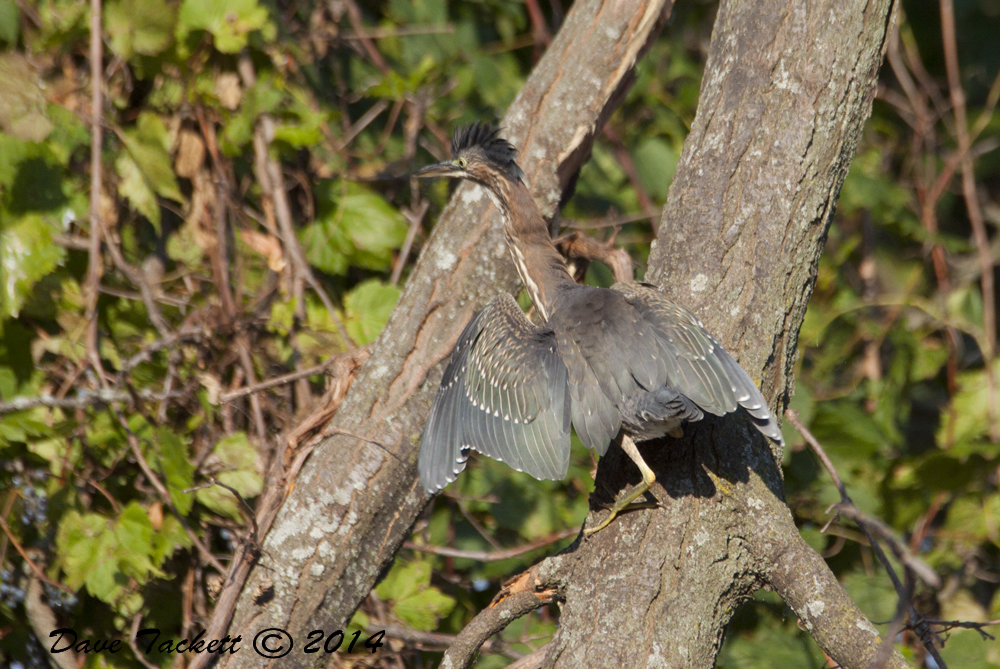 IMG_2052t1