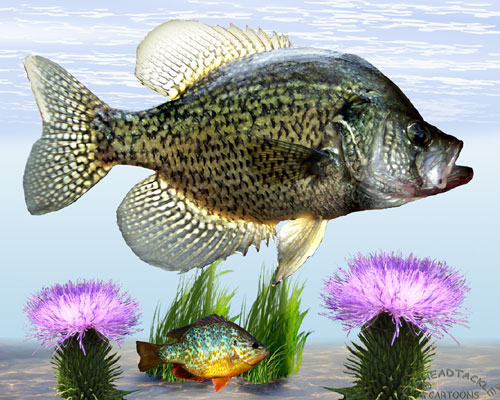 Crappie stump