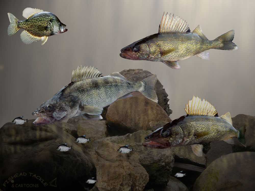 10 walleye rocks
