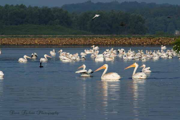 Mississippi River Birds
