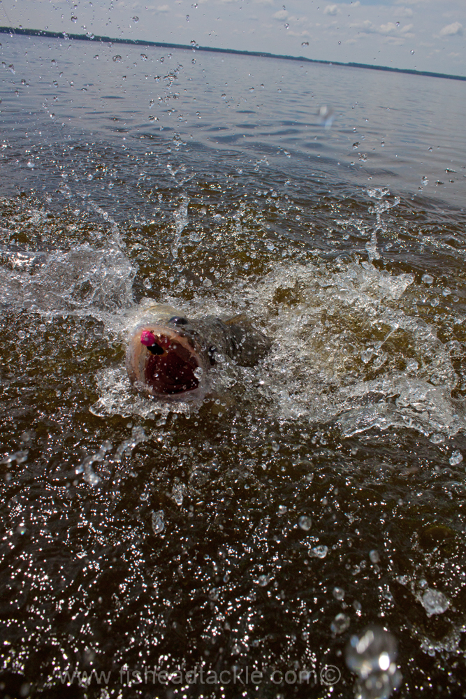 IMAGE: http://www.fisheadtackle.com/images/2012/photos12/IMG_8366e1.jpg