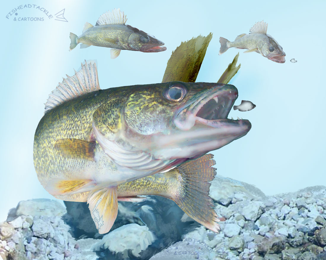 Back to WallpapersWalleye Pictures
